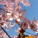 Пролет пукна. Време е за разходки сред природата