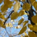 Есенна разходка в Русенския парк