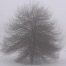 """Временно класиране във Фотоконкурса """"Зимни красоти"""""""