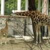 Индия: Един (Incredible) зоопарк