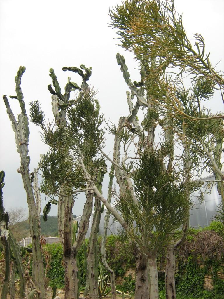 Кактусова градина
