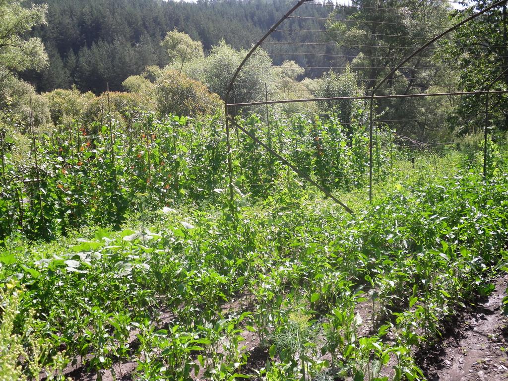 Градина в Дълга лука