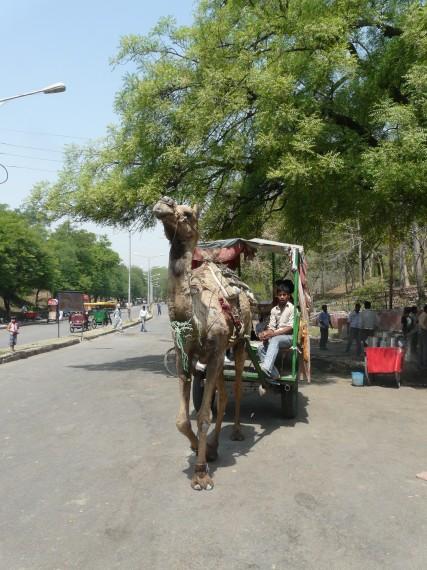 Възможности за транспорт до Тадж Махал