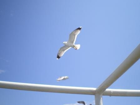 Na feribota