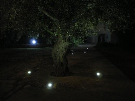 нощни маслини