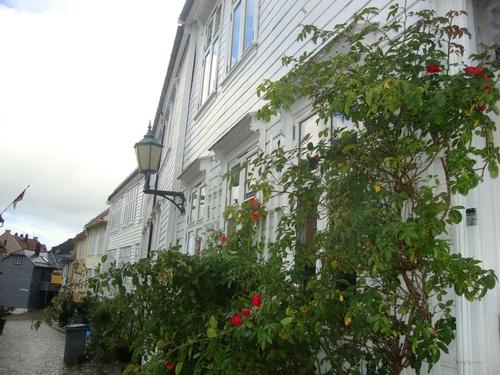 Пълзящи рози - по дома на Кай или на Герда?