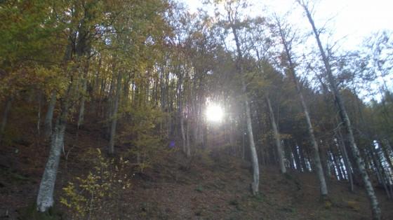 Snimka 8