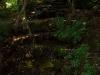 Крушунските водопади 6