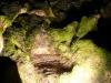 Пещера Магурата - малко зеленина