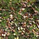 Есента през вашия обектив