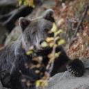 Парк за танцуващи мечки в гр. Белица