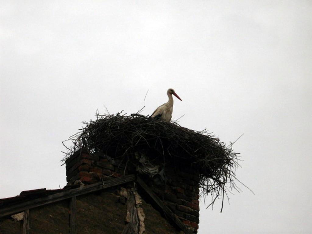 Щъркели - гнездо