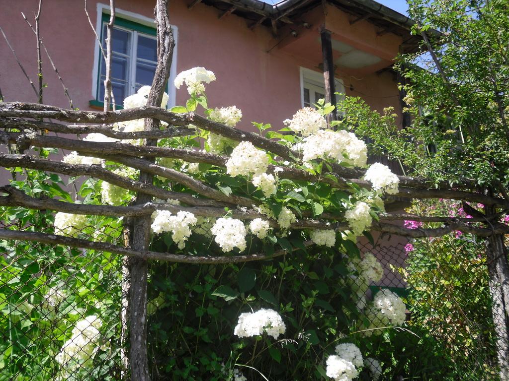 Цветна градина в Дълга лука