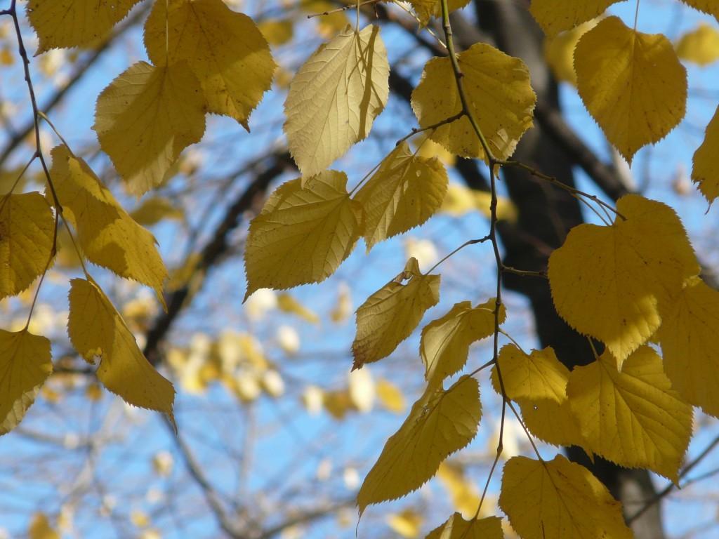 Златна есен - Русе