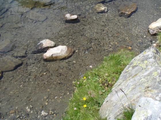 Рибките в Бъбрека